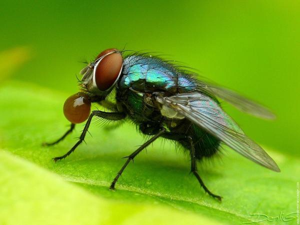 astuces naturelles pour chasser les mouches de la maison. Black Bedroom Furniture Sets. Home Design Ideas